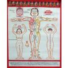 Tibetan Medicine Yoga Thangka no. 3 - 40 x 49cm