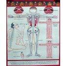 Tibetan Medicine Yoga Thangka no. 4 - 40 x 48cm